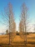 Πάροδος των δέντρων χωρίς φύλλα στοκ εικόνα με δικαίωμα ελεύθερης χρήσης