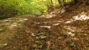 Πέτρες στο δρόμο Ίχνος βουνών στα Καρπάθια βουνά φιλμ μικρού μήκους