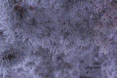 Παγωμένο πρωί βελόνων πεύκων στοκ εικόνα με δικαίωμα ελεύθερης χρήσης
