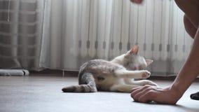 Παιχνίδια εφήβων με μια γάτα στο σπίτι απόθεμα βίντεο