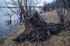 Παλαιό ξύλινο κολόβωμα στην παραλία, που βρίσκεται στην άμμο, ημέρα άνοιξη από τον ποταμό στοκ εικόνες