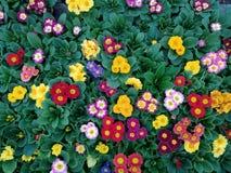 Παράδεισος λουλουδιών στοκ εικόνες
