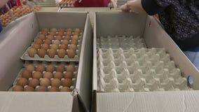 Παραγωγή αυγών σε ένα εργοστάσιο