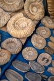 Παραδοσιακή μαροκινή αγορά με τα αναμνηστικά απολιθώματα των αρχαίων ζώων στοκ εικόνες με δικαίωμα ελεύθερης χρήσης