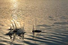 """Παφλασμοί ηλιοβασιλέματος yanikha νερού λιμνών Vodop """" στοκ εικόνες"""
