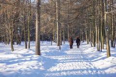 Περίπατος στο χειμερινό δασικό σκανδιναβικό περπάτημα στοκ εικόνα