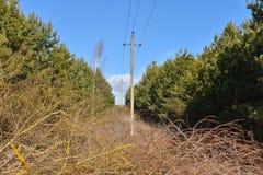 Περιορίστε μια λουρίδα στο δάσος για ένα ηλεκτροφόρο καλώδιο στοκ φωτογραφίες