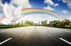 Περιστέρι ουράνιων τόξων και σύγχρονος δρόμος πόλεων στοκ εικόνα