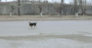 Περιπλανώμενα σκυλιά στην πόλη απόθεμα βίντεο