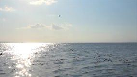 Πετώντας seagulls τοπ μύγες πουλιών σκιαγραφιών άποψης πέρα από τη θάλασσα απόθεμα βίντεο