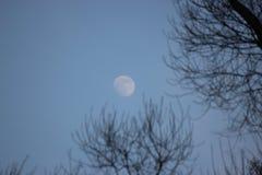Πιό μπλε, το φεγγάρι είναι μπλεγμένο στους κλάδους ενός δέντρου πανσέληνος ενάντια στο μπλε ουρανό και μαύροι κλάδοι χωρίς φύλλα  στοκ φωτογραφία