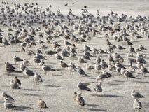 Πληθυσμός των κορμοράνων στον πάγο της λίμνης στοκ φωτογραφίες