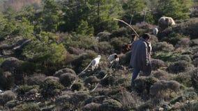 Ποιμένας και πρόβατα στους λόφους στην Ελλάδα απόθεμα βίντεο