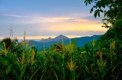 Πολύβλαστη πράσινη τροπική ζούγκλα τροπικών δασών στην ασιατική ανατολή πρωινού νότιου Eeast στοκ φωτογραφία με δικαίωμα ελεύθερης χρήσης