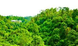 Πολύβλαστη πράσινη τροπική ζούγκλα τροπικών δασών στην ασιατική ανατολή πρωινού νότιου Eeast στοκ φωτογραφία