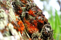 πορτοκαλιά μουγκρητά στοκ φωτογραφία