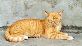 Πορτοκαλιά ριγωτή γάτα στοκ εικόνες