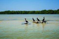 Πουλιά στη μέση στοκ εικόνες