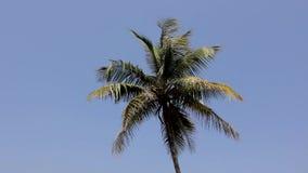Πράσινες κορυφές φύλλων φοινικών στον αέρα ενάντια σε έναν σαφή μπλε ουρανό φιλμ μικρού μήκους