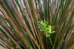 πράσινη αντίθεση υποβάθρου με την ευθεία σύσταση μίσχων στοκ φωτογραφία με δικαίωμα ελεύθερης χρήσης