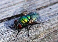 Πράσινη μύγα στο ξύλο στοκ φωτογραφία