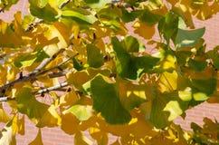 Πράσινος βγάζει φύλλα της πτώσης στοκ φωτογραφία με δικαίωμα ελεύθερης χρήσης