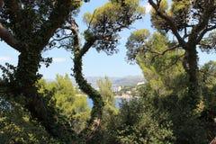 Πράσινος οι κλάδοι δέντρων σε ένα υπόβαθρο της τυρκουάζ θάλασσας στην Κροατία στοκ φωτογραφίες