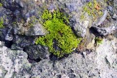 Πράσινο βρύο στο βρώμικα τσιμέντο και το αμμοχάλικο στοκ φωτογραφία με δικαίωμα ελεύθερης χρήσης