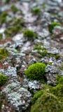 Πράσινο βρύο στο παλαιό δάσος δέντρων την άνοιξη στοκ φωτογραφία με δικαίωμα ελεύθερης χρήσης