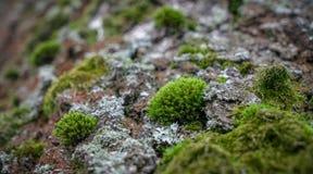 Πράσινο βρύο στο παλαιό δάσος δέντρων την άνοιξη στοκ φωτογραφίες