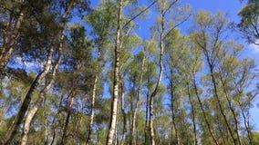 Πράσινο δάσος απόθεμα βίντεο