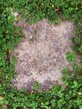Πράσινο υπόβαθρο με τα three-leaved τριφύλλια Σύμβολο διακοπών ημέρας του ST Πάτρικ ` s στοκ εικόνες με δικαίωμα ελεύθερης χρήσης
