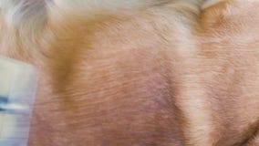 Προσοχή για την τρίχα σκυλιών φιλμ μικρού μήκους