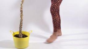 Πόδια του unrecognizable ατόμου στα καλσόν λεοπαρδάλεων που κάνουν τα βήματα στο άσπρο πάτωμα στο στούντιο Transgender άτομο που  φιλμ μικρού μήκους