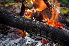 Πυρά προσκόπων στο δάσος στοκ εικόνα με δικαίωμα ελεύθερης χρήσης
