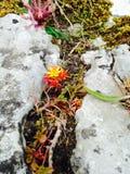 Πυρκαγιά όπως το λουλούδι ανάμεσα στη ρωγμή βράχου στοκ εικόνες