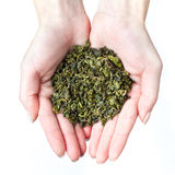 �ands holding green tea Stock Photography