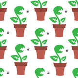 Сarnivorous plant pattern Stock Photos