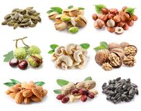 Сollection of ripe nuts and seeds. stock photos