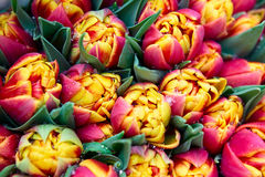 Ð¡olorful tulips bouquet Stock Photo
