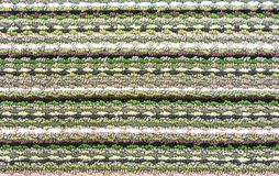 Тexture koloru dywanik tło dla projekta i dekoraci fotografia royalty free