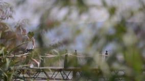 Тwo in liefde die langs een brug lopen stock footage