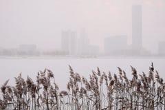 Уekaterinburg Κάλαμος στο χιόνι στην τράπεζα μιας λίμνης πόλεων Στοκ εικόνες με δικαίωμα ελεύθερης χρήσης