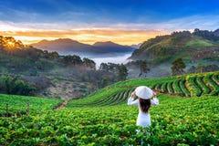 Азиатская женщина нося культуру Вьетнама традиционную в саде клубники на Ang Khang Doi, Чиангмае, Таиланде стоковые изображения rf