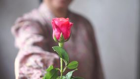 Азиатская дама с улыбкой дать розовые розы вам на ваша любовь одно движение медленное в случае Валентайн видеоматериал