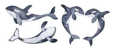 Акварель установила с шаловливыми изменениями характера кита косатки иллюстрация вектора