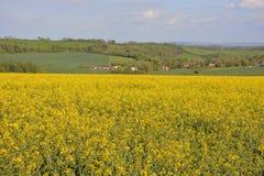 Английский ландшафт лета с полем рапса семени масличной культуры стоковые изображения