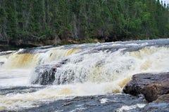 Атлантика семга скачет водопад в глуши стоковое фото