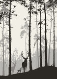 а pine forest with a family of deer and birds vector illustration