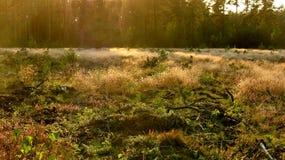 �utumn vegetation Stock Photo